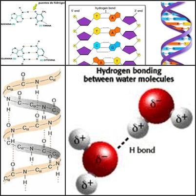 Enlaces por puente de hidrógeno en las  biomoléculas